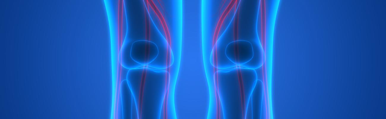 articulatia genunchiului biomecanica